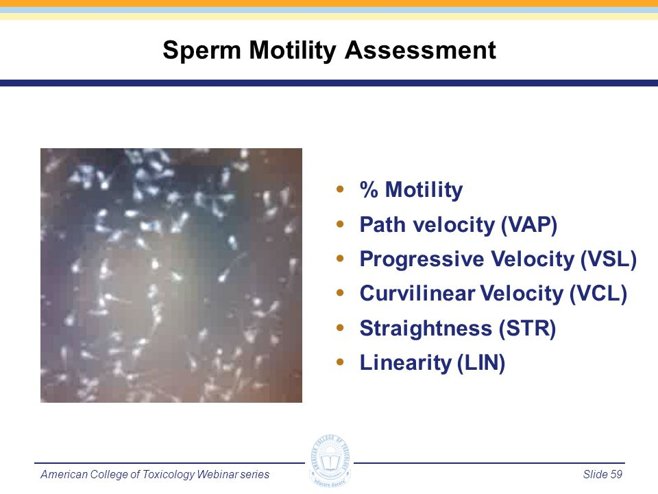 Slide 60American College of Toxicology Webinar series Sperm Quality – Count/Concentration Concentration of spermatozoa is measured by homogenizing the testis or epididymis and counting the number of homogenized-resistant sperm.