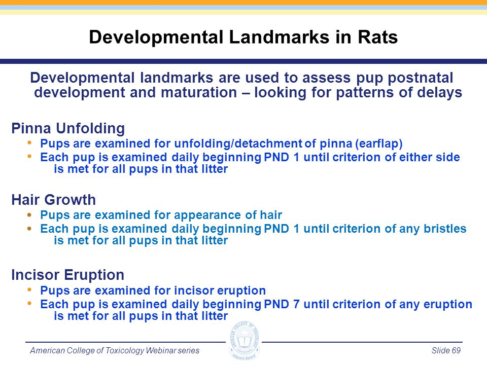 Slide 70American College of Toxicology Webinar series Eye Opening Pups are examined for any membrane break between in eyelids Each pup is examined daily beginning PND 10 until criterion of either eye is met for all pups in that litter Nipple Retention Males are examined for presence of nipples Each pup is examined daily PNDs 11 through 13 until criterion of no nipples present is met for all male pups in that litter Testes Descent Males are examined for presence of one or both testes in the scrotum Each pup is examined daily beginning PND 19 until criterion of testes in the scrotum is met for all male pups in that litter Developmental Landmarks in Rats