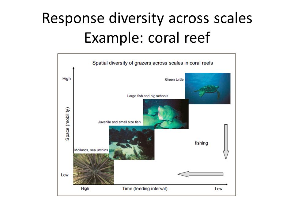 Response diversity across scales Example: coral reef