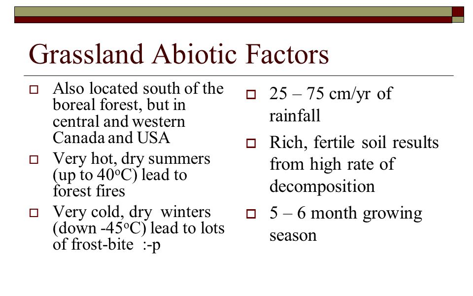 Grassland Abiotic Factors  Also located south of the boreal forest, but in central and western Canada and USA  Very hot, dry summers (up to 40 o C) lead to forest fires  Very cold, dry winters (down -45 o C) lead to lots of frost-bite :-p  25 – 75 cm/yr of rainfall  Rich, fertile soil results from high rate of decomposition  5 – 6 month growing season