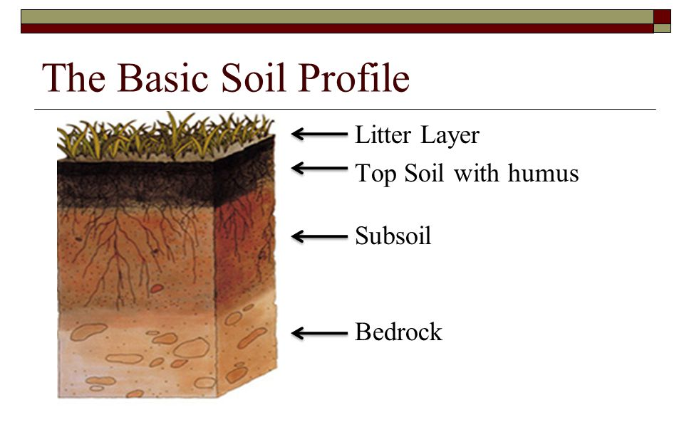 The Basic Soil Profile Litter Layer Top Soil with humus Subsoil Bedrock