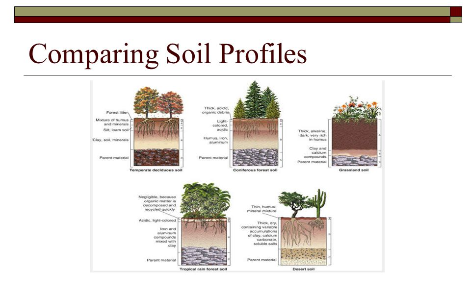 Comparing Soil Profiles