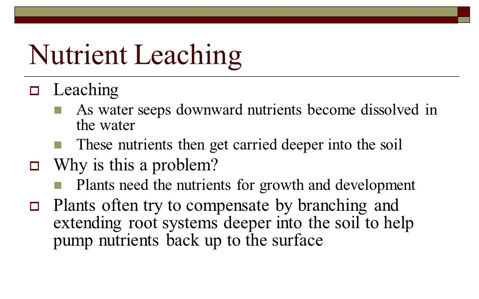 Nutrient Leaching  Leaching As water seeps downward nutrients become dissolved in the water These nutrients then get carried deeper into the soil  Why is this a problem.