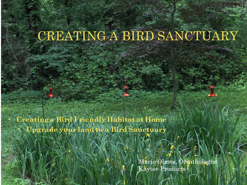 Creating a Bird Friendly Habitat at Home Upgrade your land to a Bird Sanctuary CREATING A BIRD SANCTUARY Mario Olmos, Ornithologist Kaytee Products