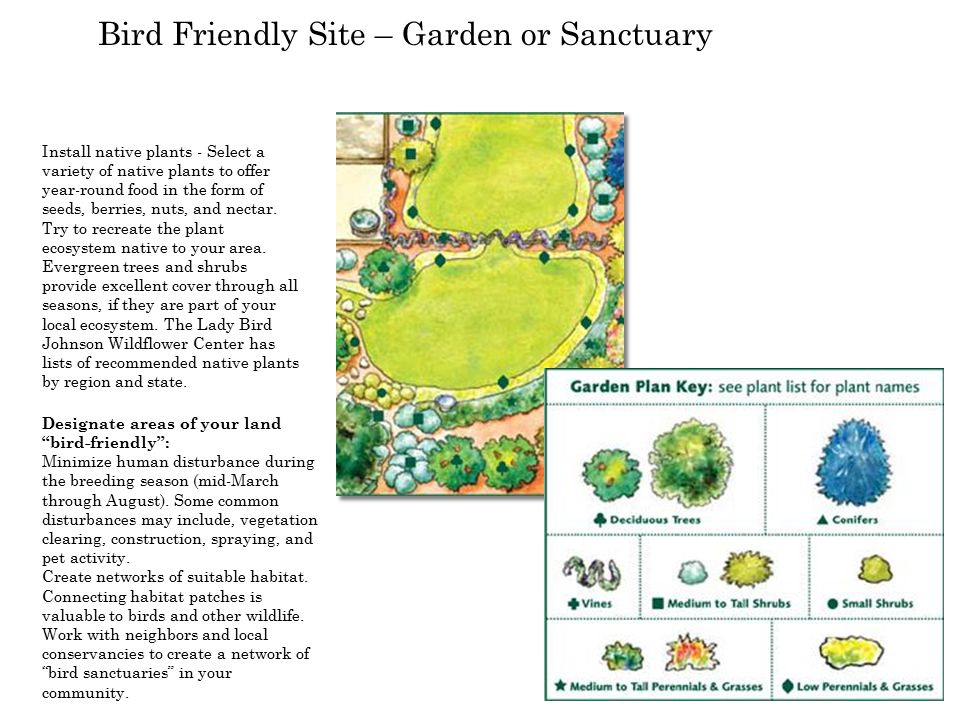 Bird Friendly Site – Garden or Sanctuary Install native plants - Select a variety of native plants to offer year-round food in the form of seeds, berries, nuts, and nectar.