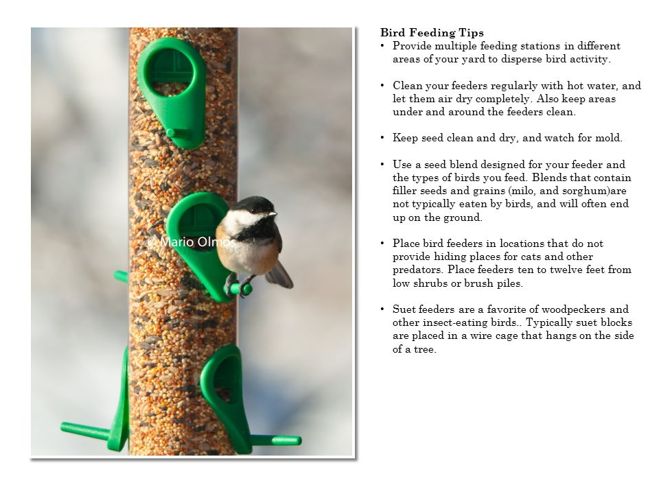 Bird Feeding Tips Provide multiple feeding stations in different areas of your yard to disperse bird activity. Clean your feeders regularly with hot w