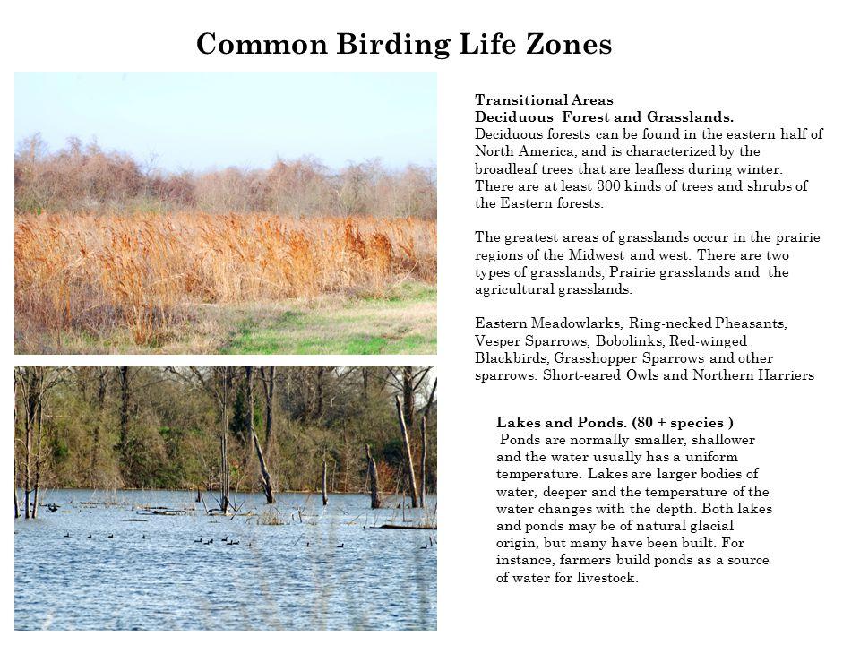 Common Birding Life Zones Lakes and Ponds.