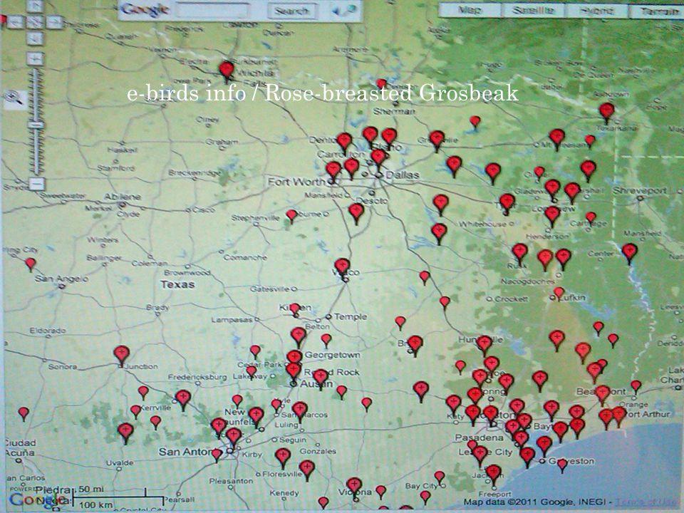 e-birds info / Rose-breasted Grosbeak