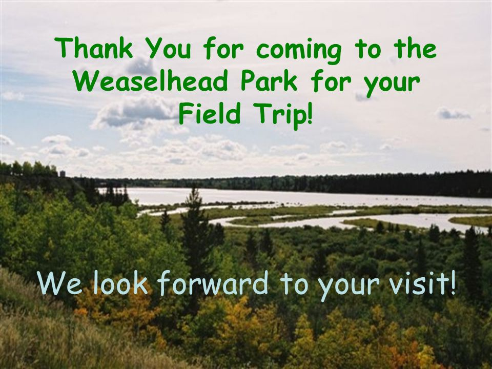 Thank You for coming to the Weaselhead Park for your Field Trip! We look forward to your visit!