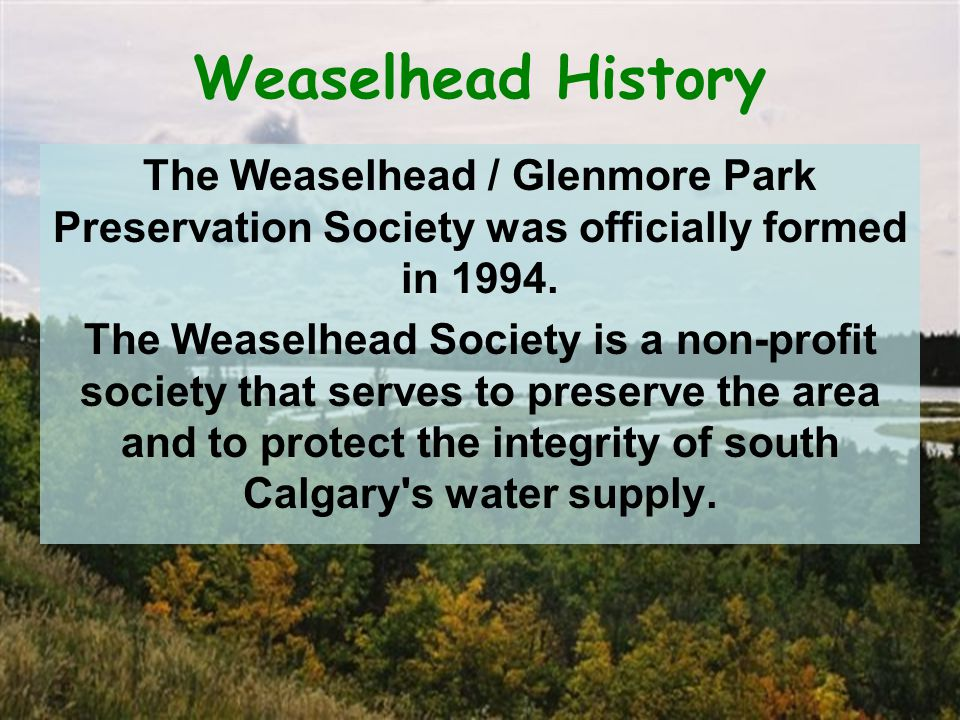 Weaselhead History The Weaselhead / Glenmore Park Preservation Society was officially formed in 1994.