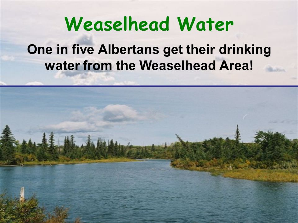 Weaselhead Water One in five Albertans get their drinking water from the Weaselhead Area!