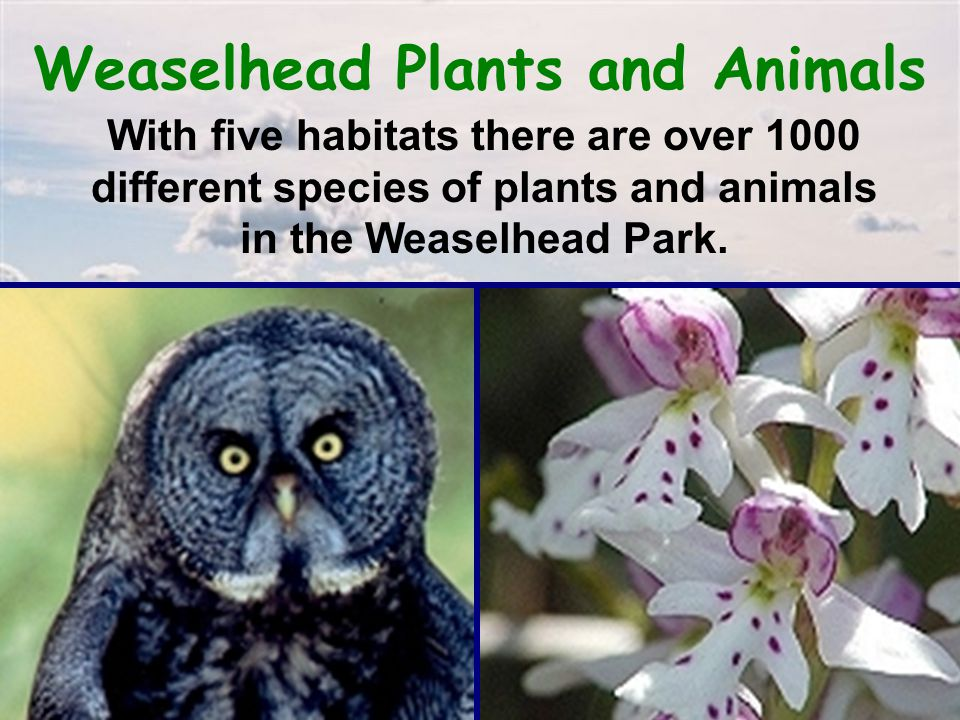 Weaselhead Plants and Animals With five habitats there are over 1000 different species of plants and animals in the Weaselhead Park.