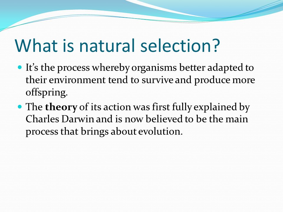 What is natural selection? It's the process whereby organisms better adapted to their environment tend to survive and produce more offspring. The theo