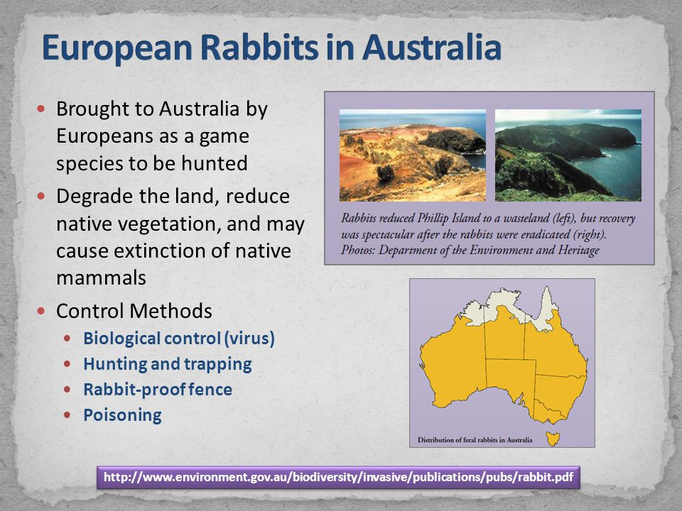 Brought to Australia by Europeans as a game species to be hunted Degrade the land, reduce native vegetation, and may cause extinction of native mammal