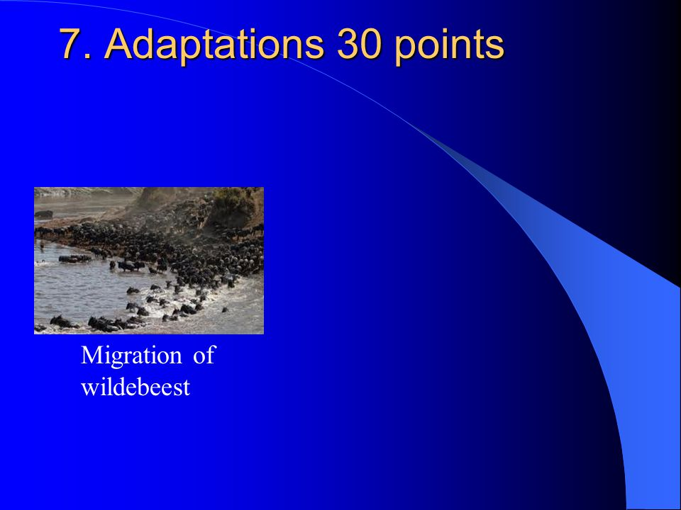 7. Adaptations 30 points Migration of wildebeest