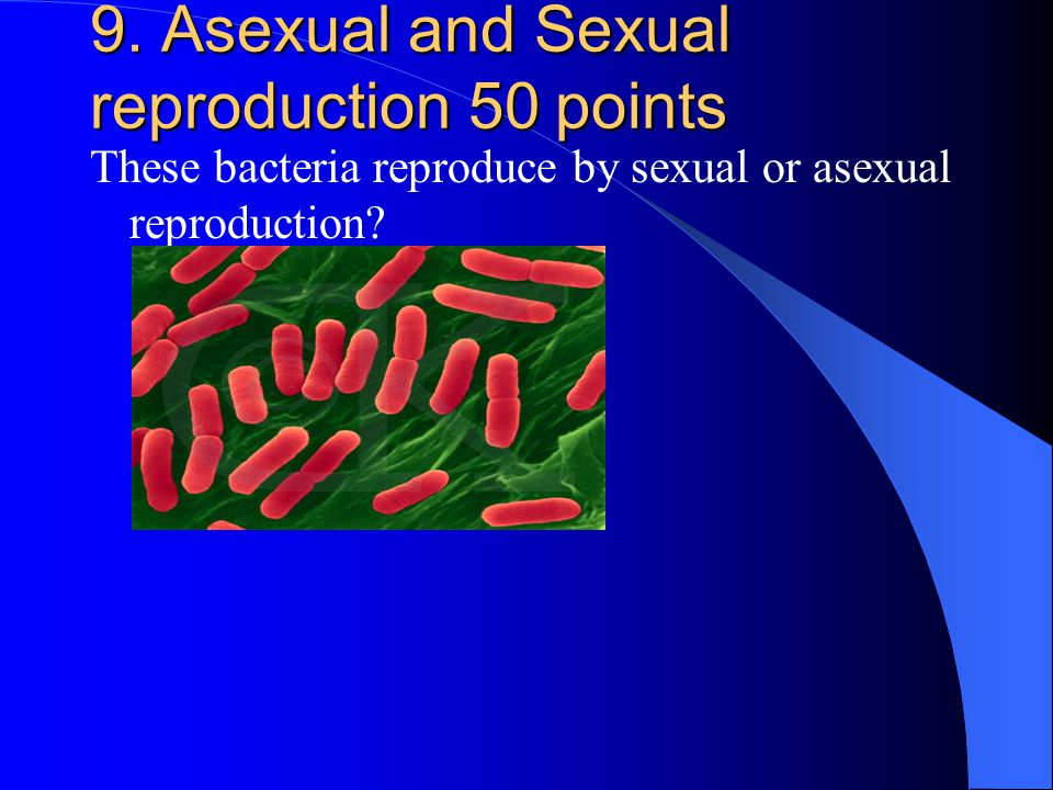 9. Asexual and Sexual reproduction 50 points These bacteria reproduce by sexual or asexual reproduction?
