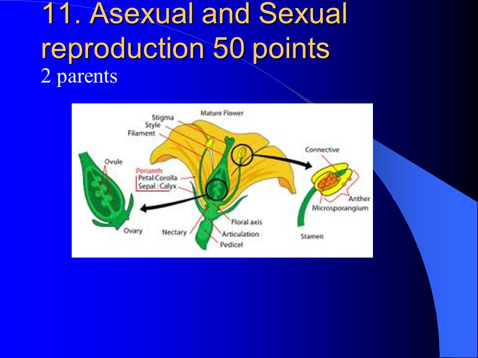 11. Asexual and Sexual reproduction 50 points 2 parents