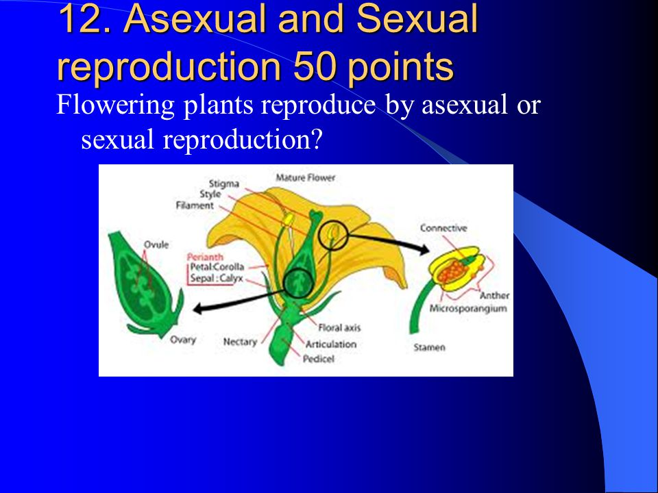12. Asexual and Sexual reproduction 50 points Flowering plants reproduce by asexual or sexual reproduction?