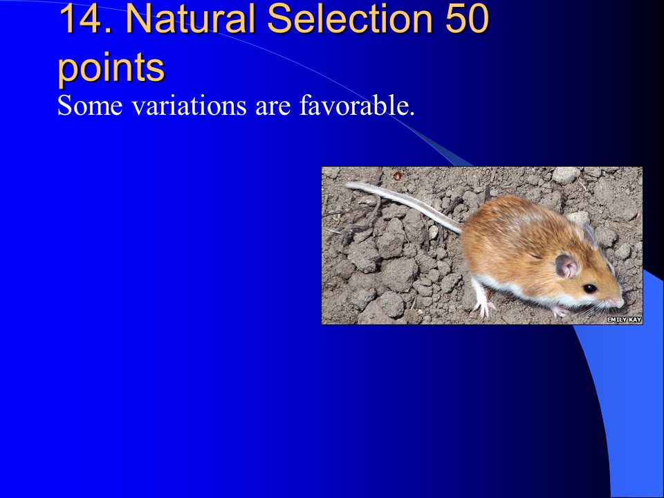 14. Natural Selection 50 points Some variations are favorable.