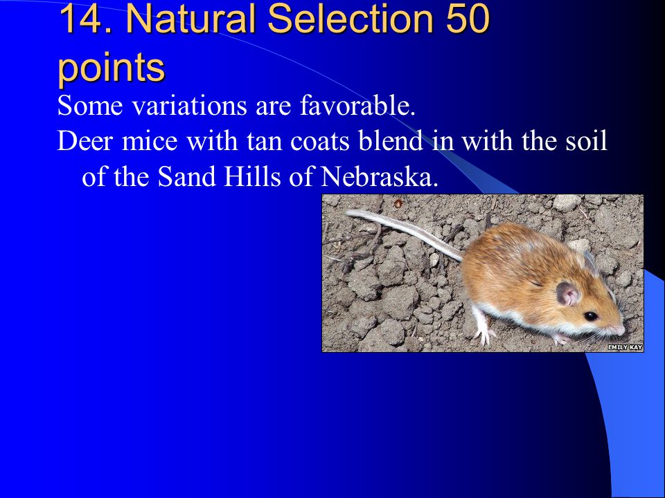 14. Natural Selection 50 points Some variations are favorable. Deer mice with tan coats blend in with the soil of the Sand Hills of Nebraska.