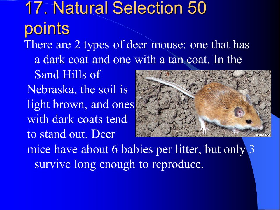 17. Natural Selection 50 points There are 2 types of deer mouse: one that has a dark coat and one with a tan coat. In the Sand Hills of Nebraska, the