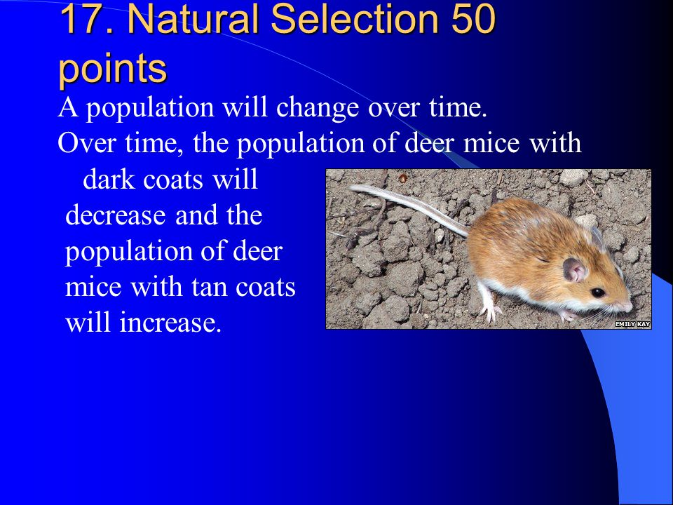 17. Natural Selection 50 points A population will change over time. Over time, the population of deer mice with dark coats will decrease and the popul