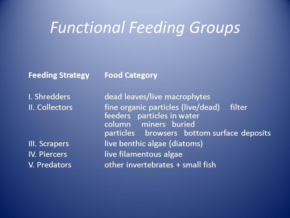 Functional Feeding Groups Feeding Strategy Food Category I.