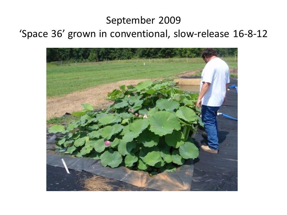 September 2009 'Hubei #5' grown in Nature Safe 8-5-5