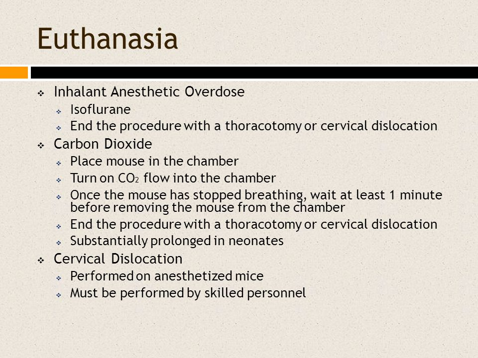 Euthanasia  Inhalant Anesthetic Overdose  Isoflurane  End the procedure with a thoracotomy or cervical dislocation  Carbon Dioxide  Place mouse i