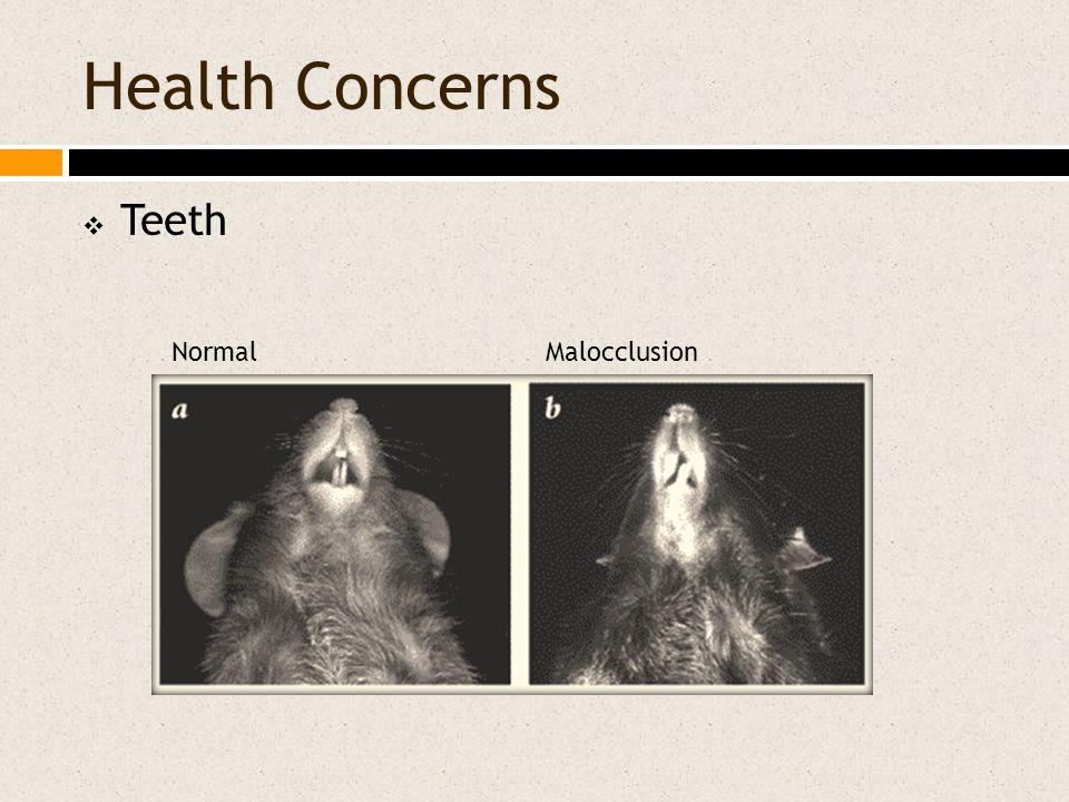Health Concerns  Teeth NormalMalocclusion