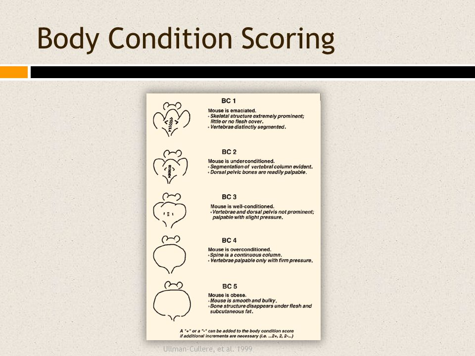 Body Condition Scoring Ullman-Cullere, et al. 1999