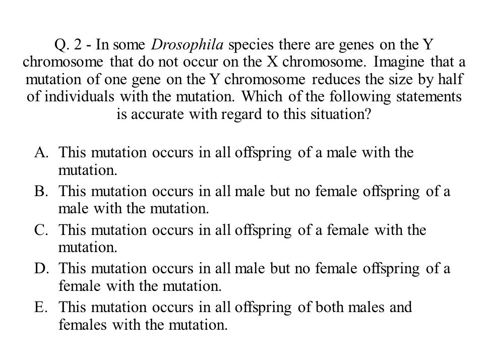 Q. 2 - In some Drosophila species there are genes on the Y chromosome that do not occur on the X chromosome. Imagine that a mutation of one gene on th