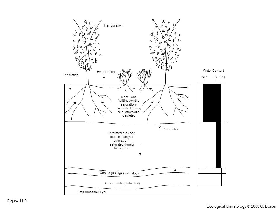 Impermeable Layer Groundwater (saturated) Capillary Fringe (saturated) Root Zone (wilting point to saturation) saturated during rain, otherwise depleted Intermediate Zone (field capacity to saturation) saturated during heavy rain WP FC SAT Water Content Transpiration Infiltration Evaporation Percolation Figure 11.9 Ecological Climatology © 2008 G.