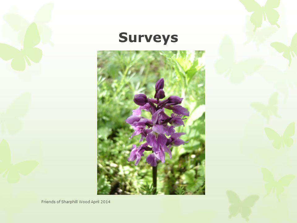 Surveys Friends of Sharphill Wood April 2014