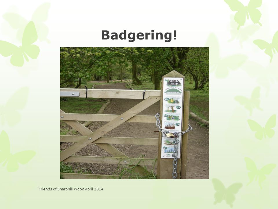 Badgering! Friends of Sharphill Wood April 2014