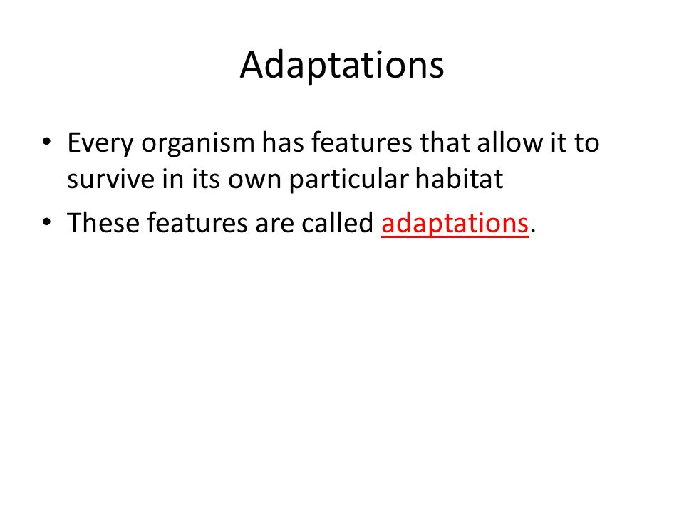 Adaptations Every organism has features that allow it to survive in its own particular habitat These features are called adaptations.
