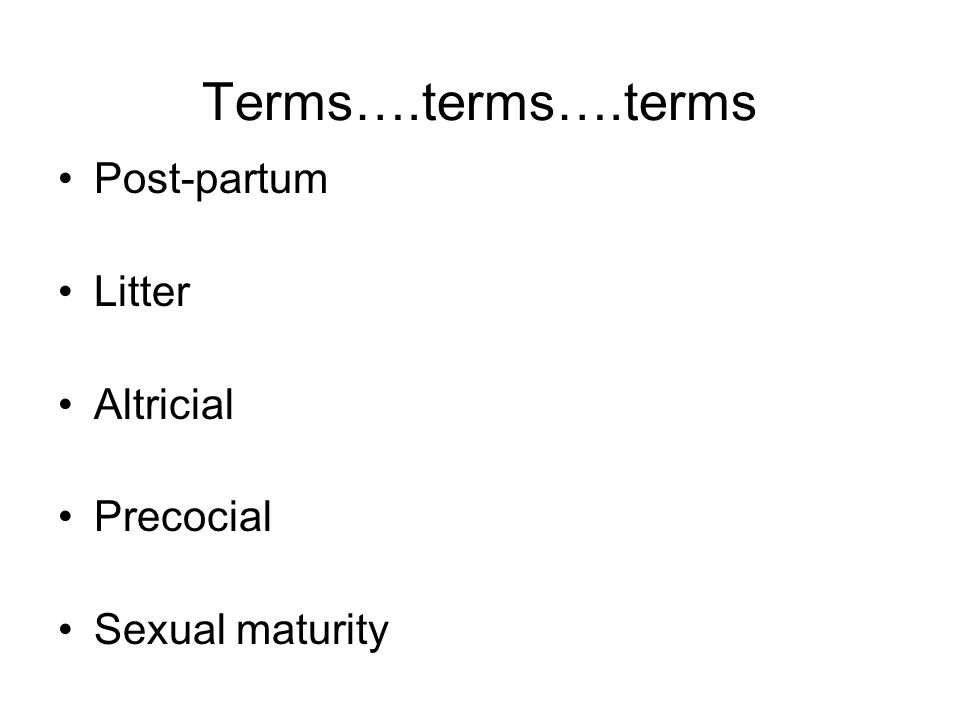 Terms….terms….terms Post-partum Litter Altricial Precocial Sexual maturity