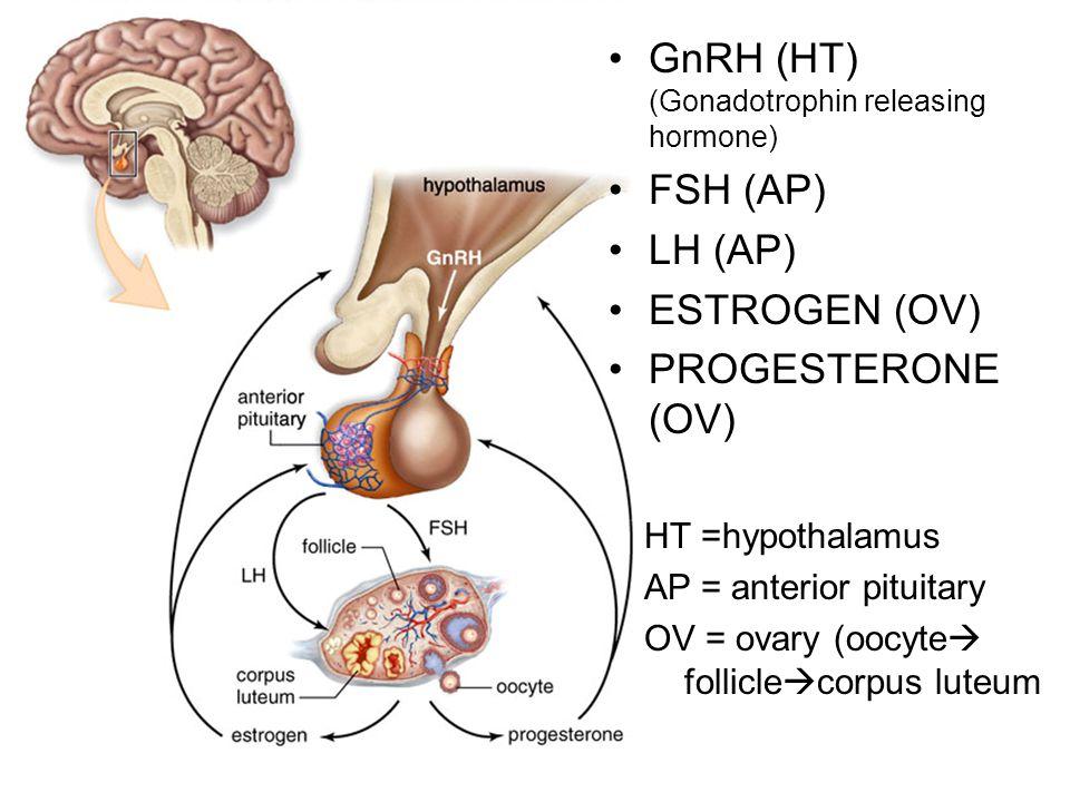 GnRH (HT) (Gonadotrophin releasing hormone) FSH (AP) LH (AP) ESTROGEN (OV) PROGESTERONE (OV) HT =hypothalamus AP = anterior pituitary OV = ovary (oocyte  follicle  corpus luteum