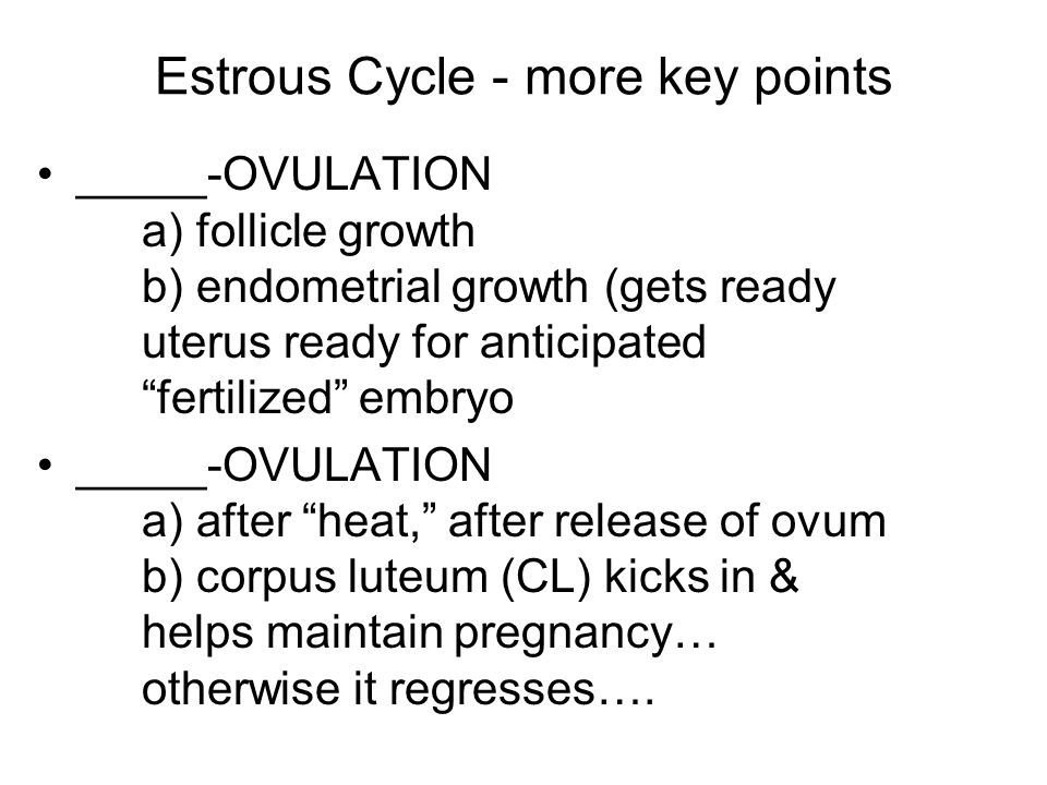 Estrous Cycle - more key points _____-OVULATION a) follicle growth b) endometrial growth (gets ready uterus ready for anticipated fertilized embryo _____-OVULATION a) after heat, after release of ovum b) corpus luteum (CL) kicks in & helps maintain pregnancy… otherwise it regresses….