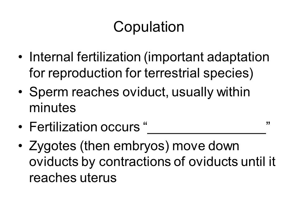 Copulation Internal fertilization (important adaptation for reproduction for terrestrial species) Sperm reaches oviduct, usually within minutes Fertilization occurs ________________ Zygotes (then embryos) move down oviducts by contractions of oviducts until it reaches uterus