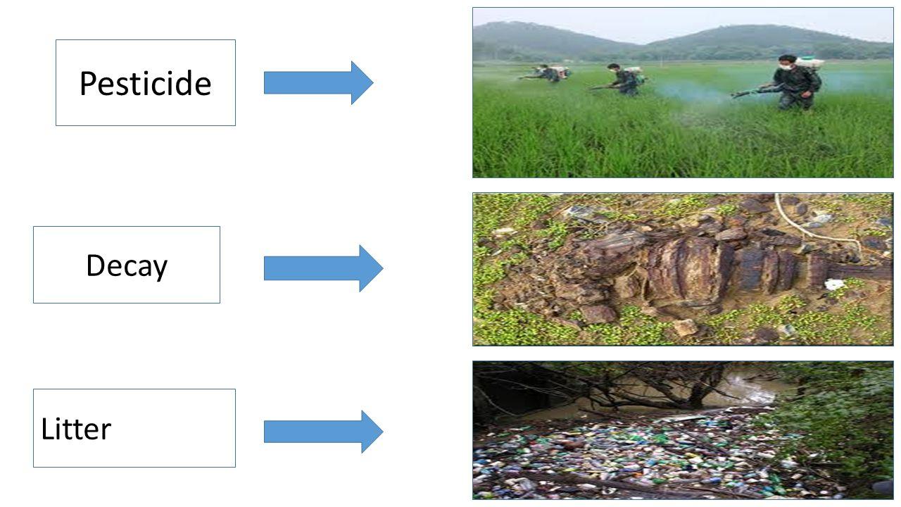 Pesticide Decay Litter
