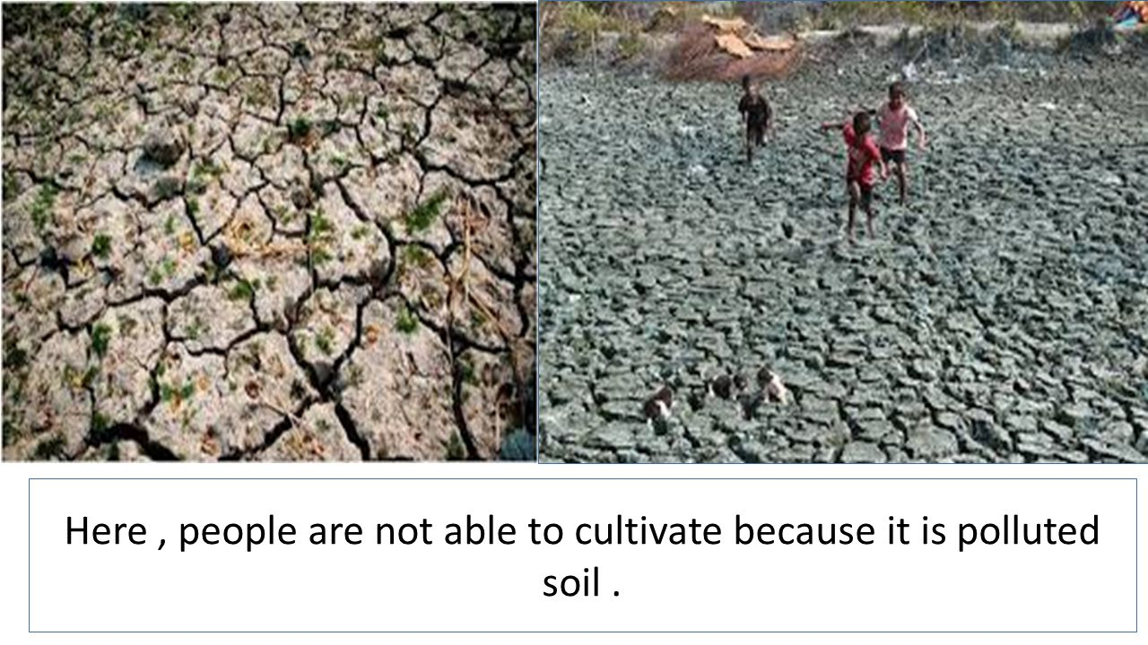 Here, people are not able to cultivate because it is polluted soil.
