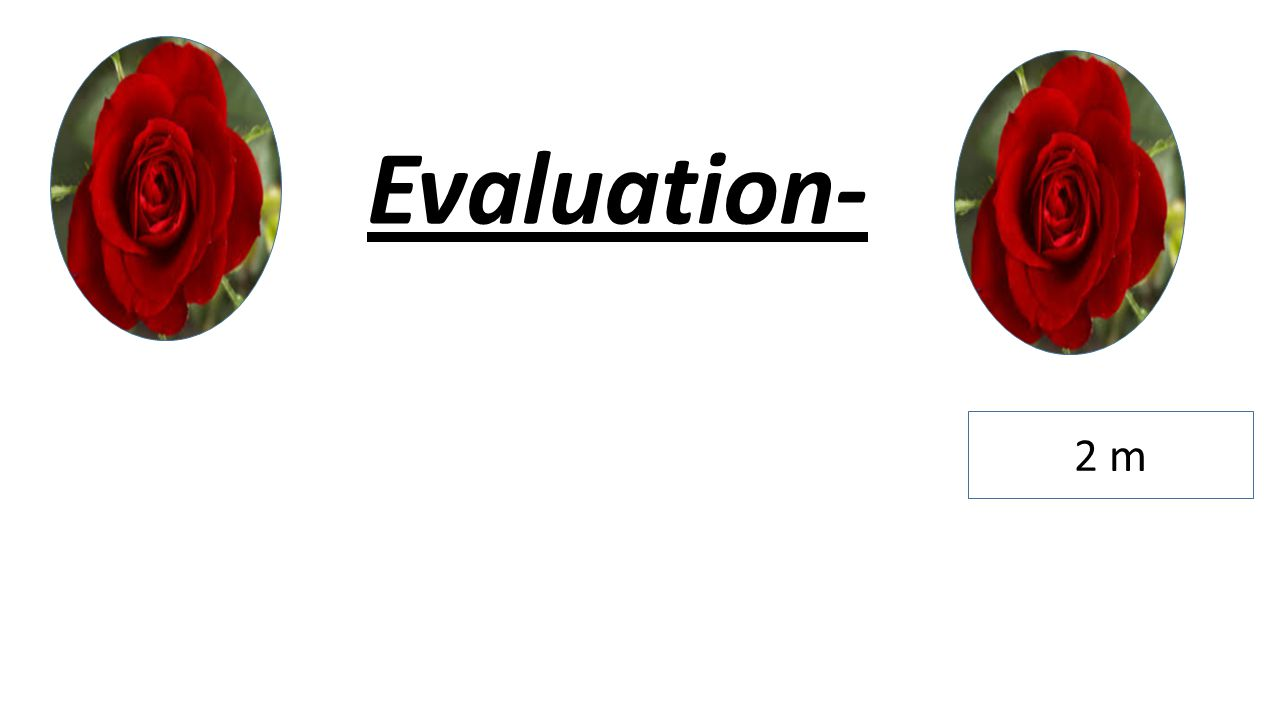Evaluation- 2 m