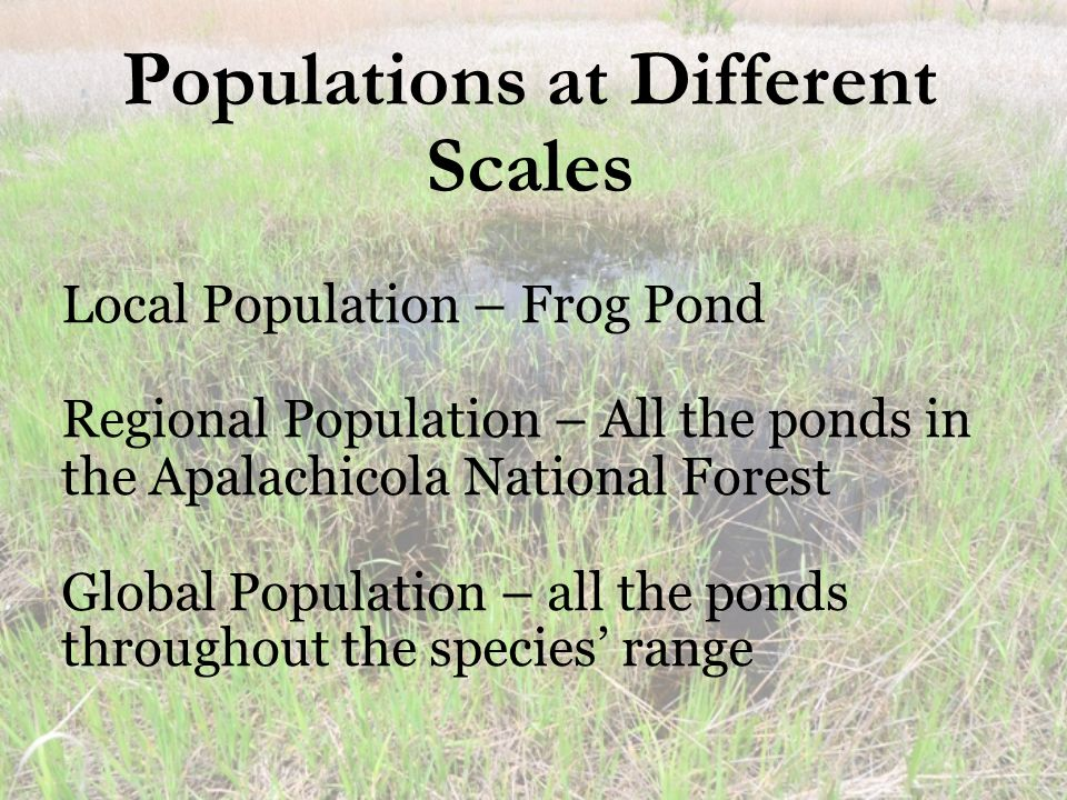 Local Population – Frog Pond Regional Population – All the ponds in the Apalachicola National Forest Global Population – all the ponds throughout the species' range Populations at Different Scales