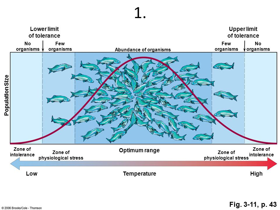 1. Lower limit of tolerance Upper limit of tolerance TemperatureLowHigh Abundance of organisms Few organisms Few organisms No organisms No organisms Z