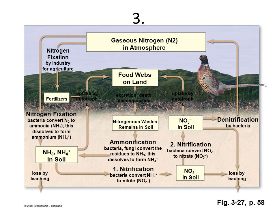 3. Gaseous Nitrogen (N2) in Atmosphere Nitrogen Fixation by industry for agriculture Food Webs on Land Fertilizers uptake by autotroph s excretion, de