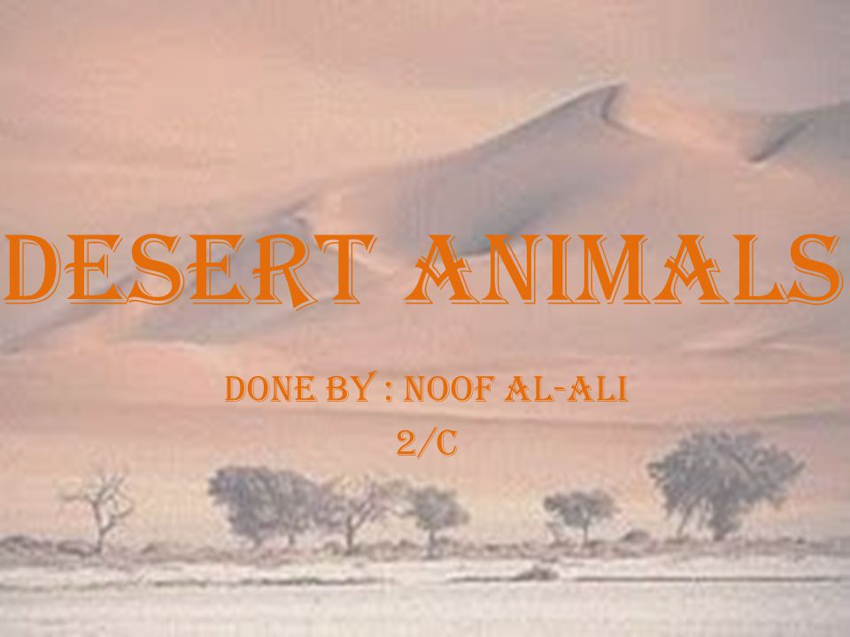 Desert animals Done by : noof al-ali 2/c