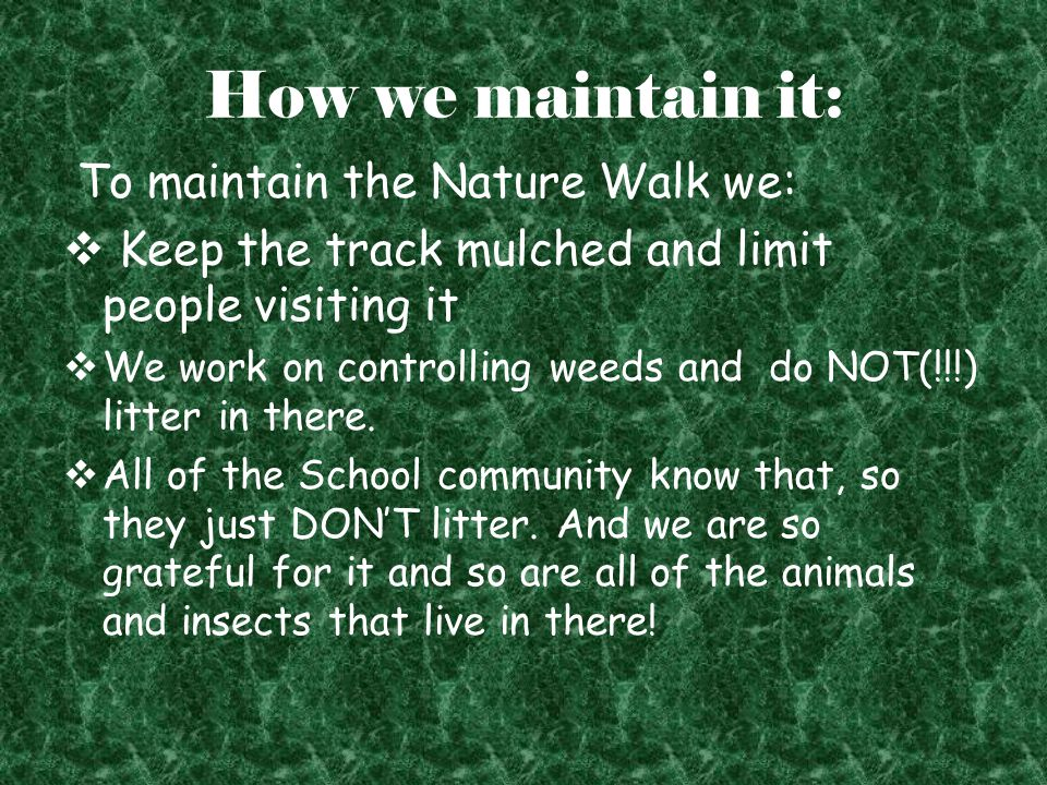 How we maintain it: To maintain the Nature Walk we:  Keep the track mulched and limit people visiting it  We work on controlling weeds and do NOT(!!!) litter in there.