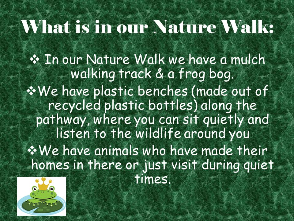 What is in our Nature Walk:  In our Nature Walk we have a mulch walking track & a frog bog.