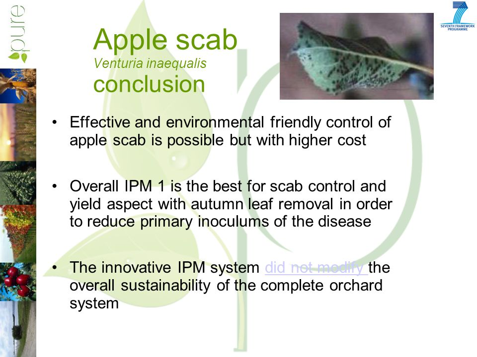 Apple scab Venturia inaequalis conclusion Effective and environmental friendly control of apple scab is possible but with higher cost Overall IPM 1 is the best for scab control and yield aspect with autumn leaf removal in order to reduce primary inoculums of the disease The innovative IPM system did not modify the overall sustainability of the complete orchard systemdid not modify
